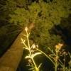 Afbeelding van LED Spot Sus Big Tops Zwart - 24V 3.6Watt