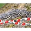 Foto van Afzetlint eikenprocessierups rood/wit - 75 mm x 500 mtr.