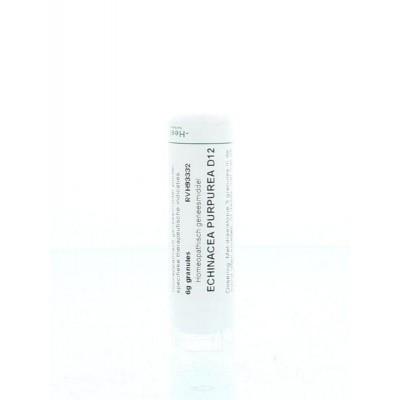 Homeoden Heel Echinacea purpurea D12