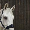 Foto van Kingsland Angie Halster Met Fleece, Blauw