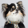 Foto van Dog With A Mission Indi Moon Halsband, goud/turquoise XS