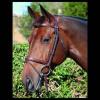 Foto van Dyon Hoofdstel NEC. Flash Noseband Full Bruin met luxe frontriem