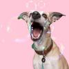 Foto van Dog With A Mission Urban Halsband, Leer Bruin L