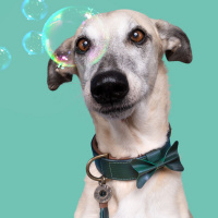 Dog With A Mission Bownie Halsband, Donker Groen M