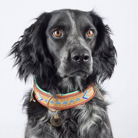 Dog With A Mission Indi Moon Halsband, goud/turquoise XL