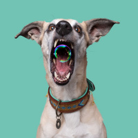 Dog With A Mission Indi Moon Halsband, goud/turquoise M