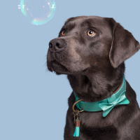 Dog With A Mission Boomer Halsband, turquoise L