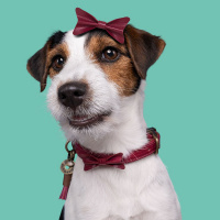 Dog With A Mission Bonnie Halsband, Bordeaux Rood XXS