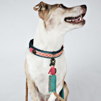 Dog With A Mission Sandy Moon Halsband, Demin Roze S