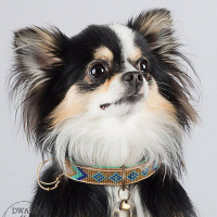 Dog With A Mission Indi Moon Halsband, goud/turquoise XS