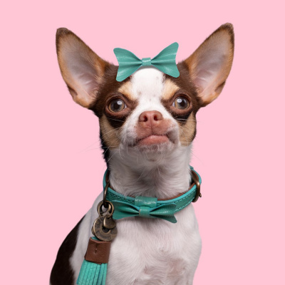 Foto van Dog With A Mission Boomer Halsband,turquoise XXXS