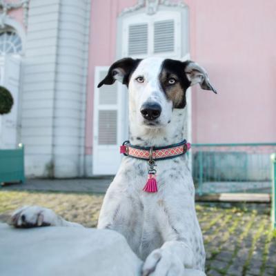 Foto van Dog With A Mission Sandy Moon Halsband, Demin Roze M
