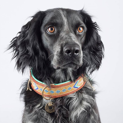 Foto van Dog With A Mission Indi Moon Halsband, goud/turquoise L