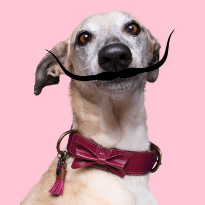 Foto van Dog With A Mission Bonnie Halsband, Bordeaux Rood L/XL