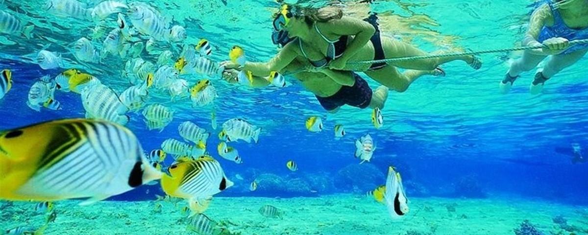 3372270257-mauritius-marinelife.jpg