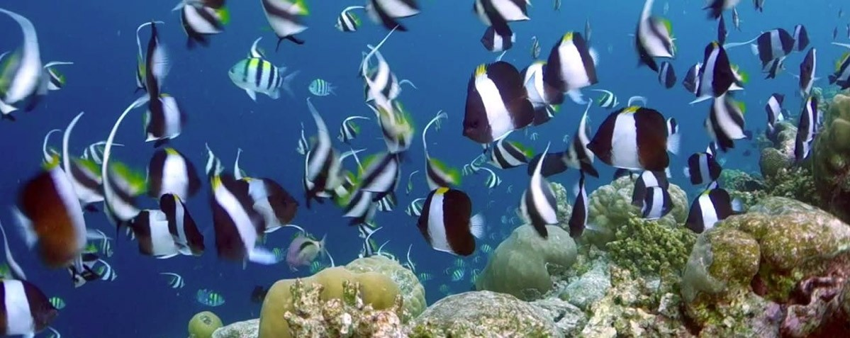 Best Snorkeling Destinations 2018 - Baa Atoll