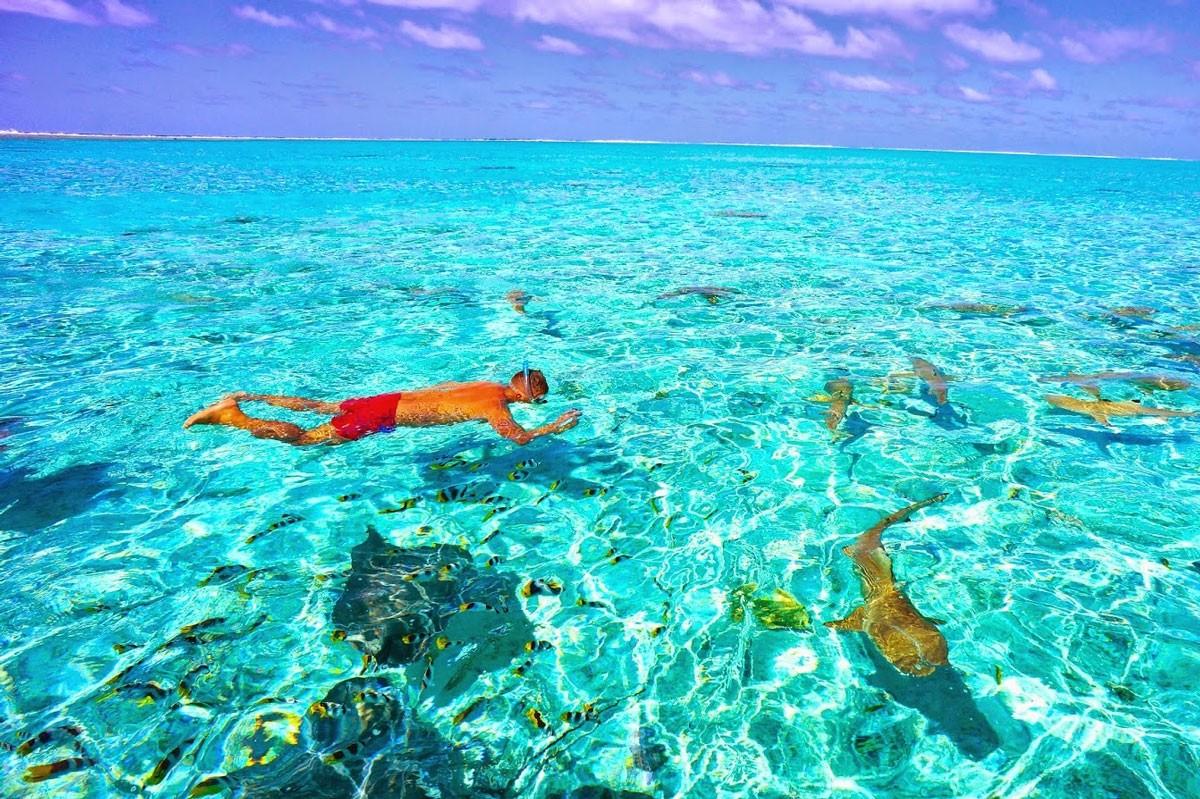 Sharks Bora Bora