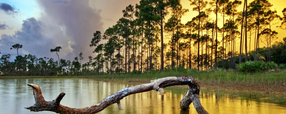Florida Travel Guide - Sanwin - Excursions