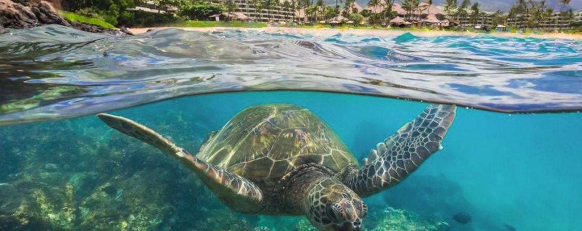 Best Snorkeling Destinations 2018 - Maui Hawaii