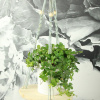 Afbeelding van Plantenhanger klein lichte kralen
