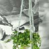 Afbeelding van Plantenhanger klein donkere kralen
