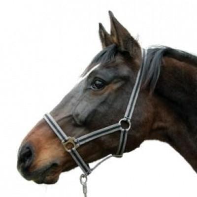 Foto van Paardenhalster grijs/zwart