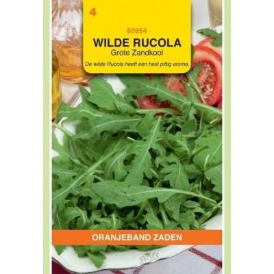 Wilde Rucola grote zandkool Oranjeband
