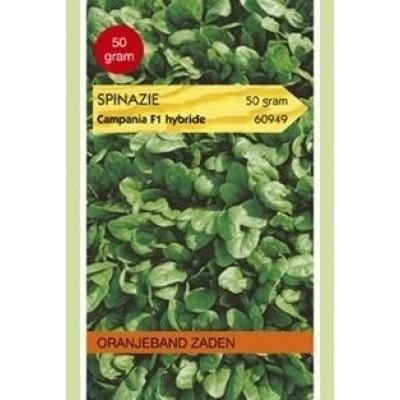 Spinazie Campania F1 - 50 gram Oranjeband