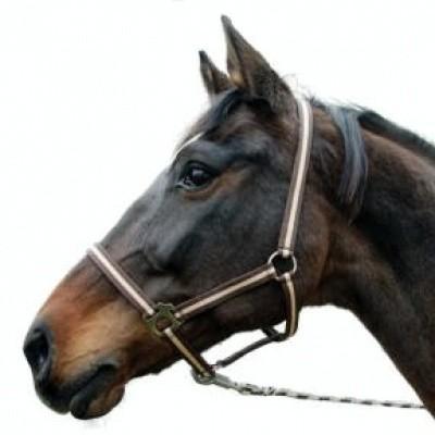 Foto van Paardenhalster bruin/beige