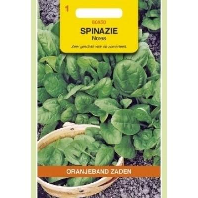 Spinazie Nores 15 gram Oranjeband