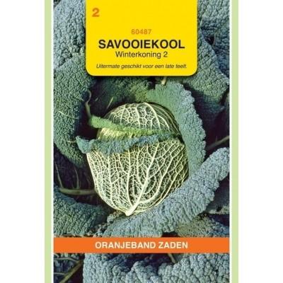 Foto van Savooiekool Winterkoning 2 Oranjeband