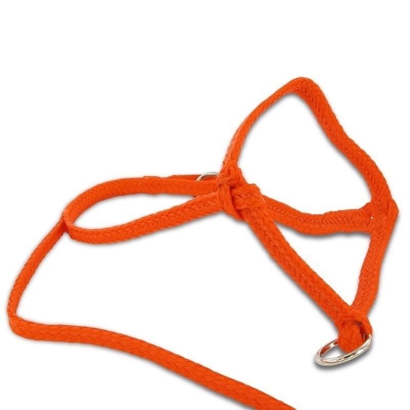 Koehalster nylon oranje extra groot