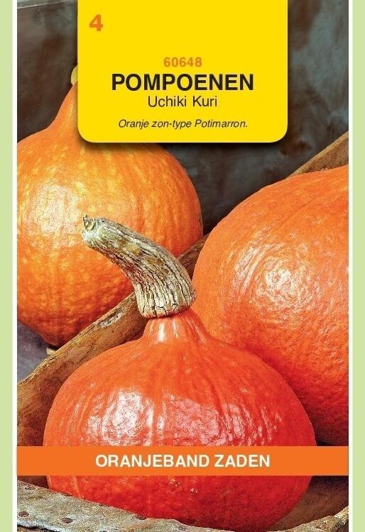 Pompoenen Uchiki Kuri. Oranjeband