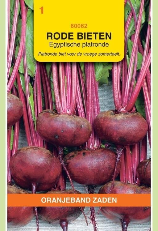 Rode Bieten Egyptische Platronde Oranjeband