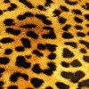 Afbeelding van Sock My Feet Tiger
