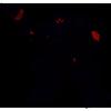 Afbeelding van Transformers Gen Studio Series Deluxe Wwii 11 cm actiefiguur
