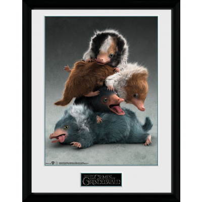 Fantastic Beasts 2: Nifflers Collector Print