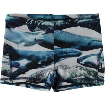 Molo boys swimshort Norton wales