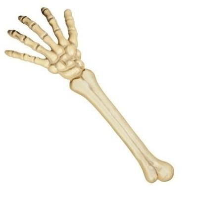 Foto van Skelet arm (46 cm)