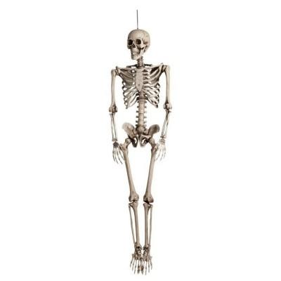 Foto van St. Skelet (160 cm)