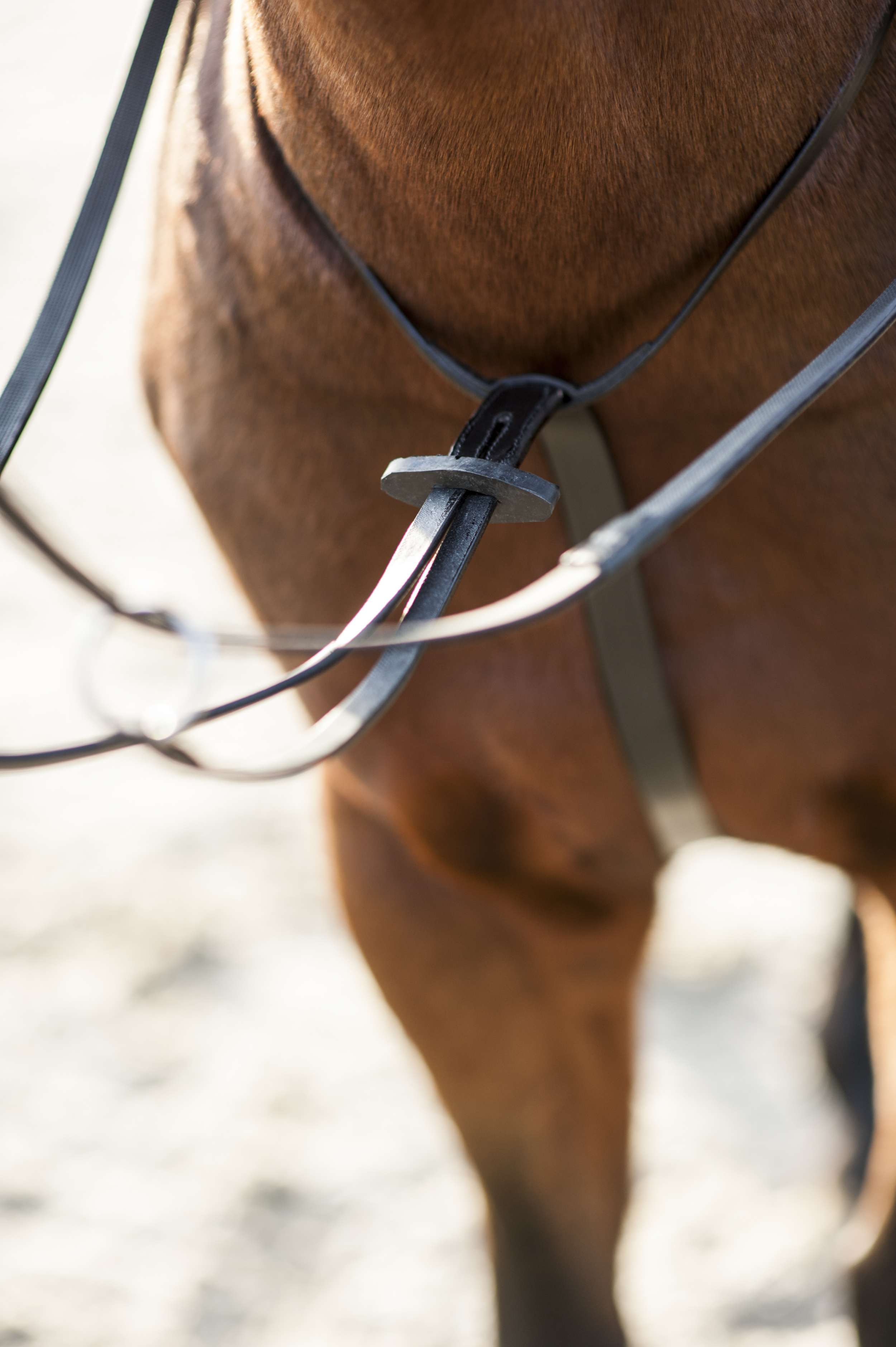 Horse Guard martingaal
