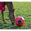 Afbeelding van Hooi feeder blauw (Hay Play Feeder)