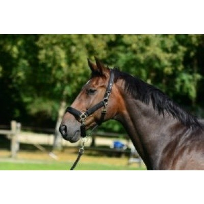 Equi-All halster HB