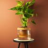 Bild von Terracotcha - selbstbewässerter Terrakotta-Pflanzenpotentopf Ø 18 cm