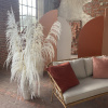 Afbeelding van Pampasgras Gedroogd Wit - 4 stuks 150cm - Premium