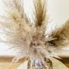 Bild von Pampasgras Getrocknete Natural - 4 Stück 100cm