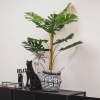 Afbeelding van Kunstplant - Monstera - 15x65x85cm