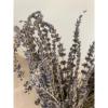 Afbeelding van Lavendel - Bos