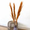 Bild von Pampasgras Getrocknete Orange - 4 Stück 100cm