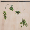 Afbeelding van Kunstplant Bosje - Staghorn - 22x22x13cm